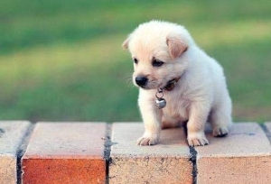Cute-puppy-photos-422